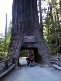 svs_drivethru_tree